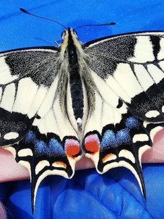 papillon insectes animaux enfants médiat