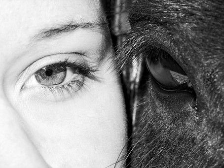 Human Facilitated Therapy for Equines