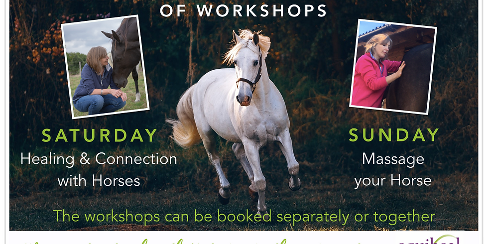 Holistic Workshop Weekend - Healing & Connection / Massage your Horse (Sainte-Colombe, France)