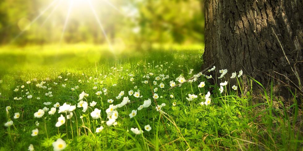 Spring Equinox Restore & Revive Day Retreat (Essex, UK)