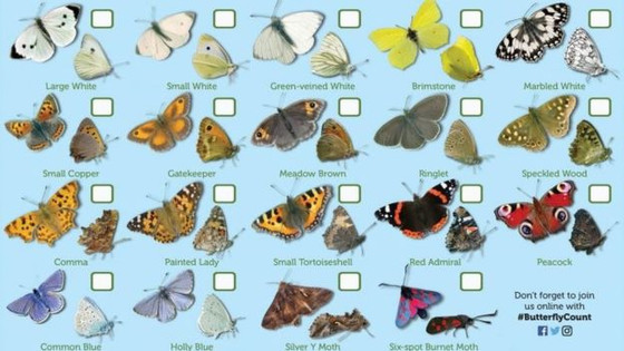 The Big Butterfly Count – The Great Outdoors!