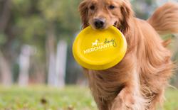 The Dog Merchant Logo Design