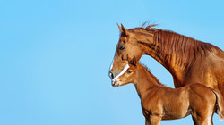 Mare and Foal_edited