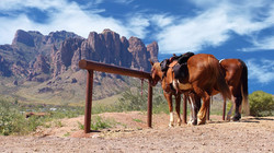 Horses in Superstitions-rev_edited