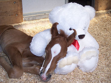 Foal Care at Southwest Equine
