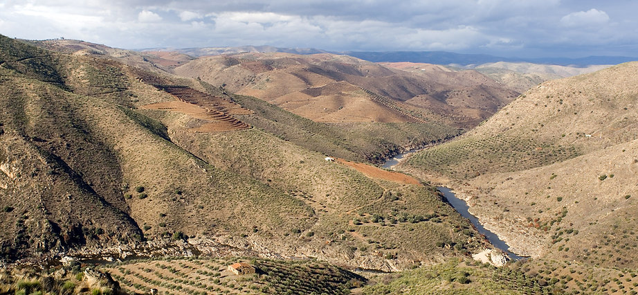 Cardina, Paleocôa
