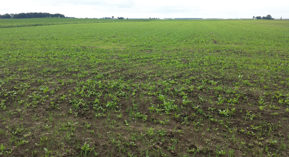 Cover Crops on the Roush Farm, 2017