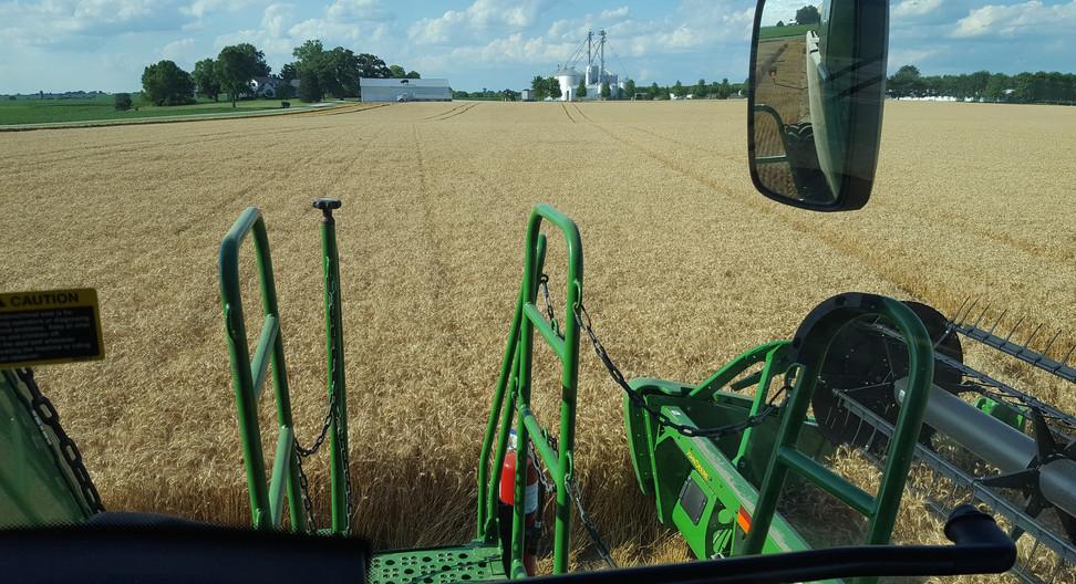 Wheat Harvest - 2017