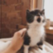 Queen_Street_Cats_(@queenstreet_cats)_â€