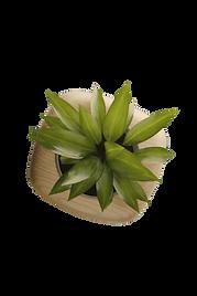LOGO PICKS_Plant_Vector.png