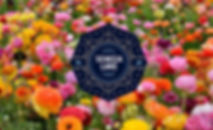 seneca lake design, finger lakes, wedding, events, design, flowers