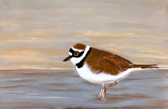 Ring Necked Plover - SOLD