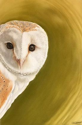 Tyto Alba - Barn Owl - Fine Art Print - A3
