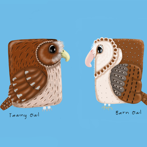 Tawny-Owl-&-Barn-Owl.jpg