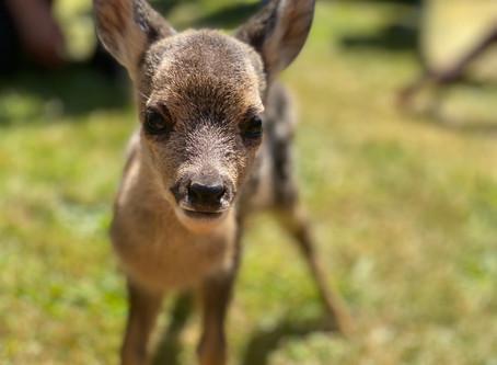 Lockdown Diary: An English teacher, a website, and a deer!