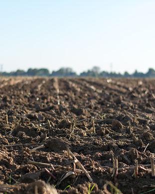 cropland-farm-farmland-1000057.jpg