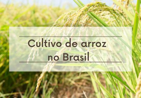 Cultivo de arroz no Brasil