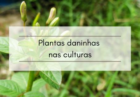 Plantas daninhas nas culturas