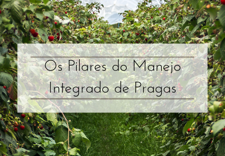 Os Pilares do Manejo Integrado de Prgas