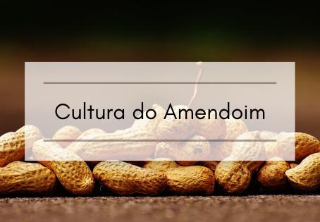 Cultura do Amendoim
