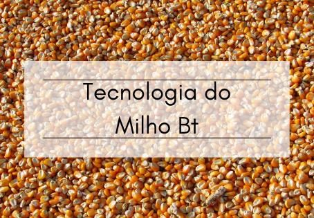 Tecnologia do Milho Bt