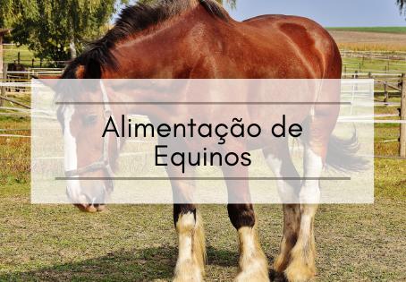 Alimentação de Equinos e relação com a Doença da Cara Inchada