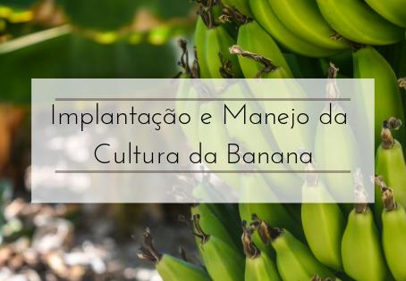 Implantação e manejo da cultura da banana.