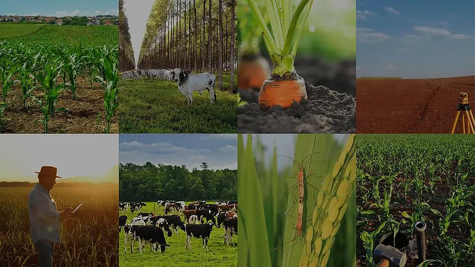 Consultoria agrícola  Cenagri Jr - Botucatu - São Paulo.webp