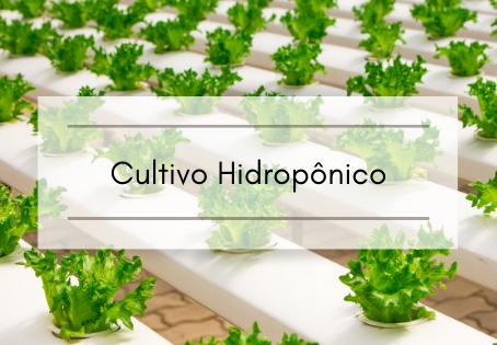 Cultivo Hidropônico