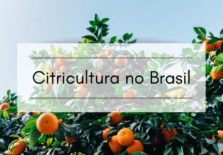 Citricultura no Brasil