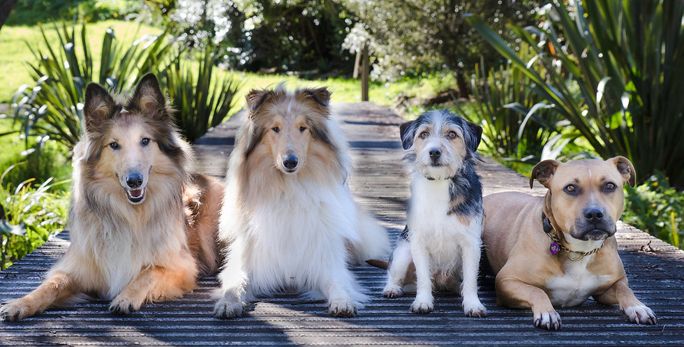Rose's dogs-4_edited.jpg