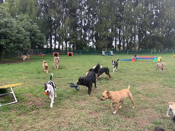 Daycare Dogs