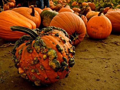 bumpy-pumpkin-1.jpg