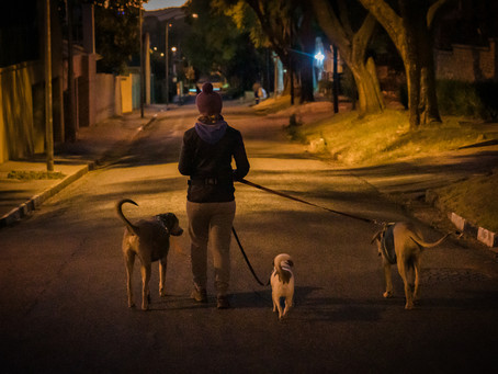 Dog walking 5. Exercise