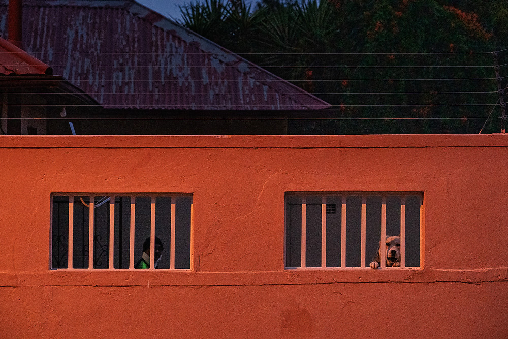 Dog and person behind wall with bars and electric fencing