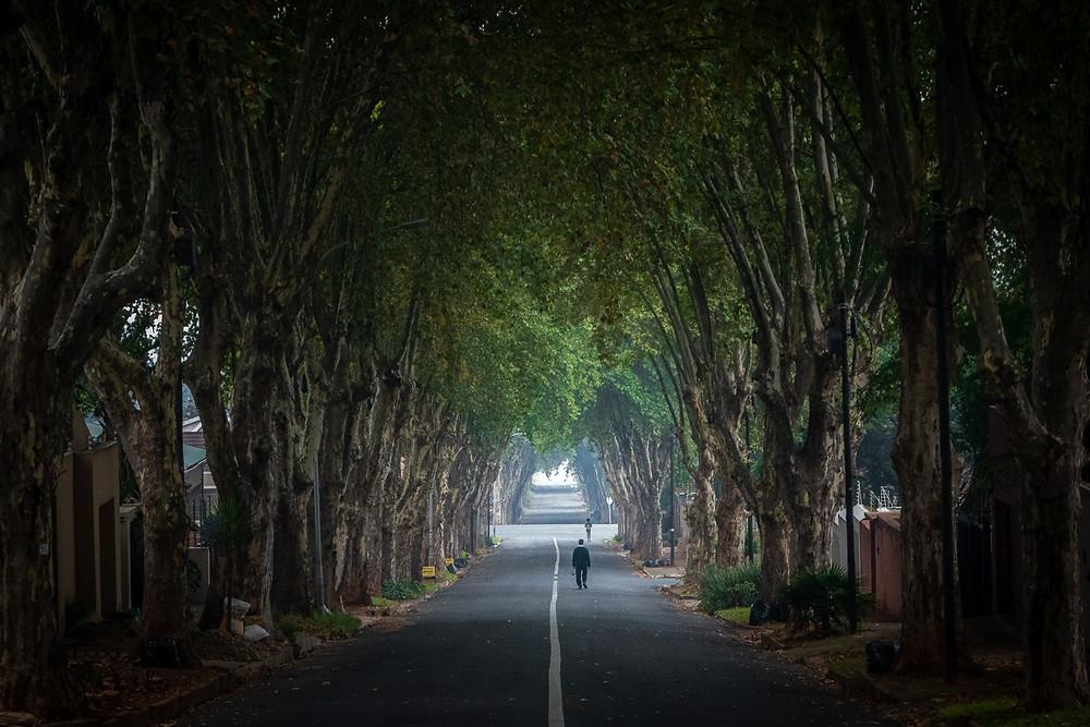 Avenue of trees on a walk in Kensington Johannesburg