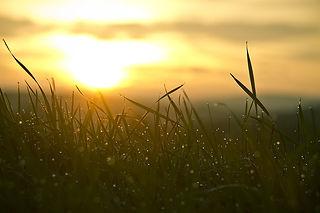 sunlight and grass.jpg