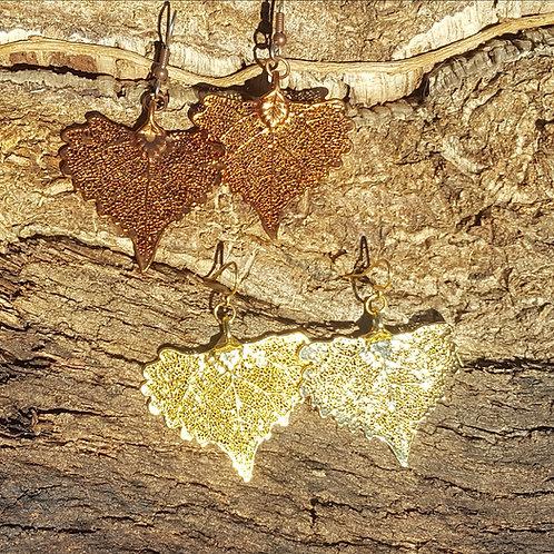 Boucles feuilles de Peuplier