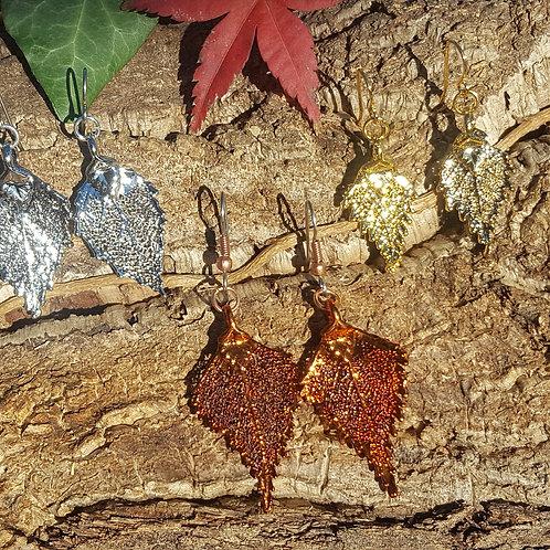 Boucles feuilles de Bouleau