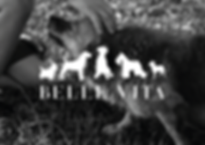 bellevita_web_banner.png
