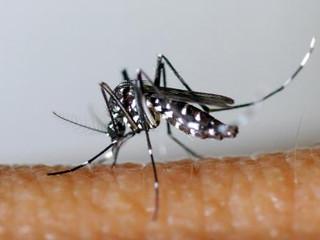 Des drones utilisés à La Réunion pour combattre le moustique tigre