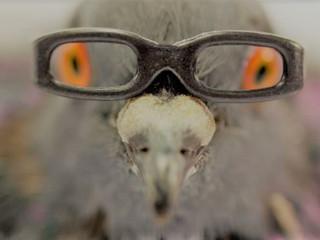 Vous ne regarderez plus jamais les oiseaux du même oeil...et êtes-vous sûre que c'est bien un oi
