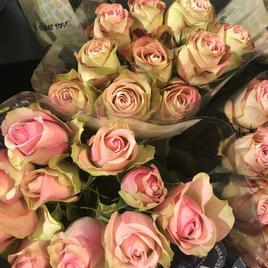Roser tåkerosa