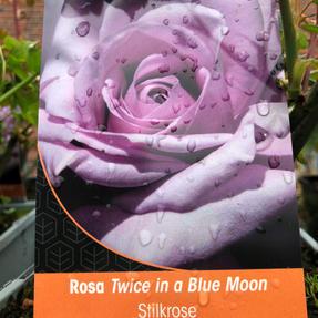 Stilk Twice in a blue moon