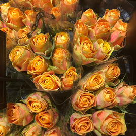 Roser gulorange