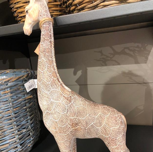Giraff stående