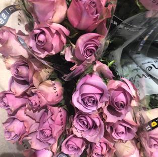 Roser lilla