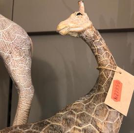 Giraff strekker halsen