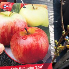 Familietre 4 sorter eple