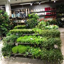 Grønne planter små
